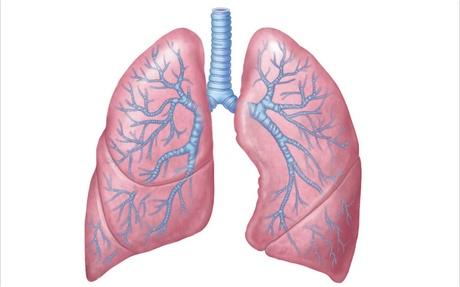 A böjtölés közben fontos a tüdő méregtelenítésének fokozása