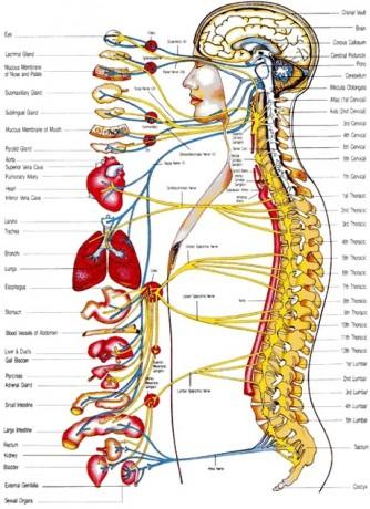 Derékfájás okai: szervi eredetű panaszok sugároznak a derekadba fájdalmat