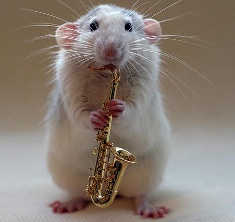 Fehérjeszükséglet: az ember egy nagy patkány?