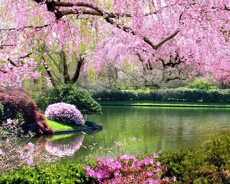 méregtelenítés tavasszal, kirándulás a virágzó erdőben