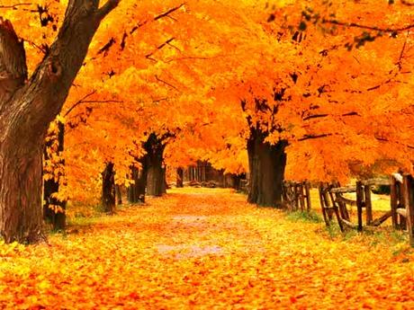 Léböjt kúra kirándulásokkal az őszi erdőben Balatonfüreden